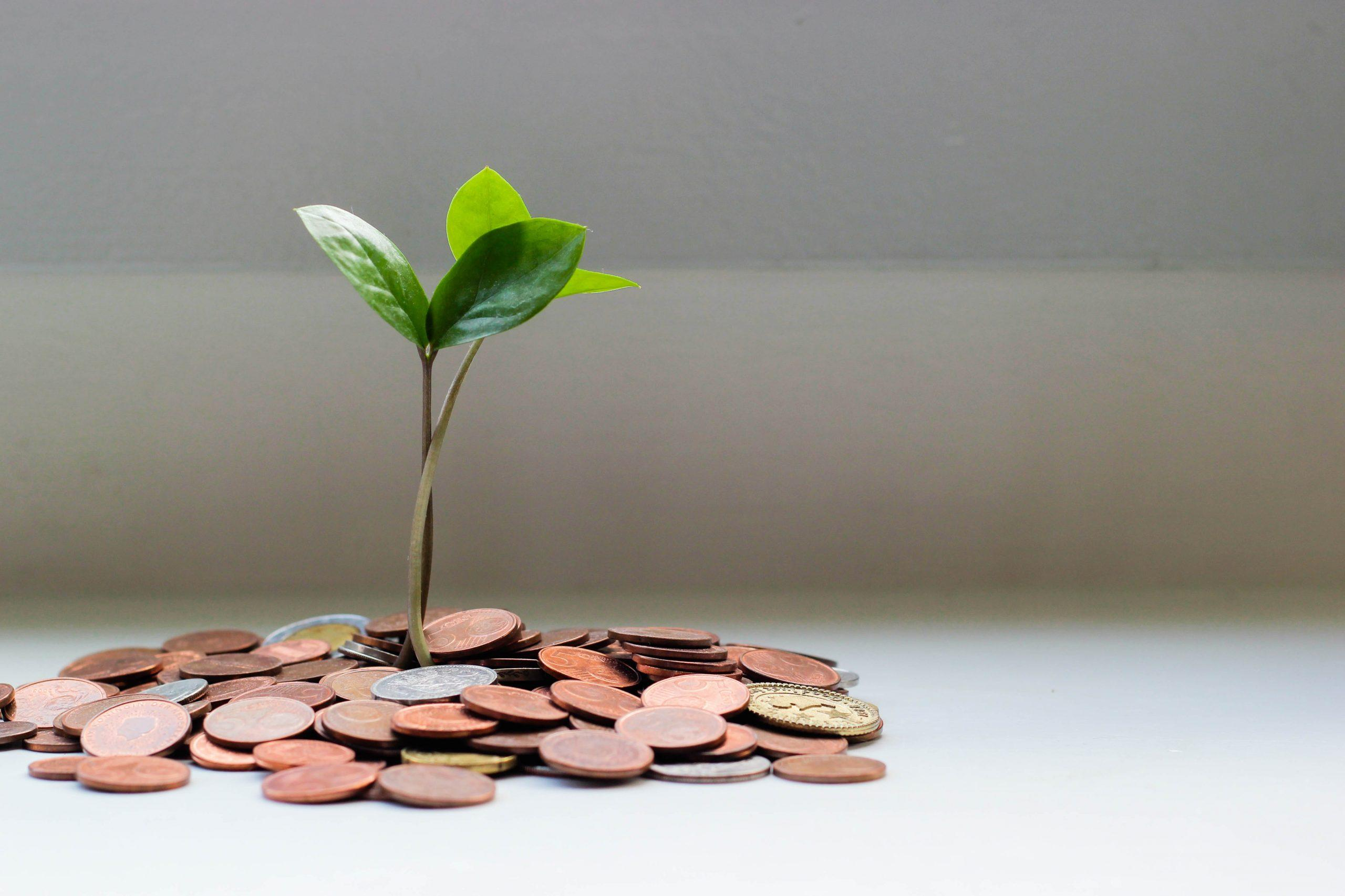 Small tree shoot growing surrounded by coins
